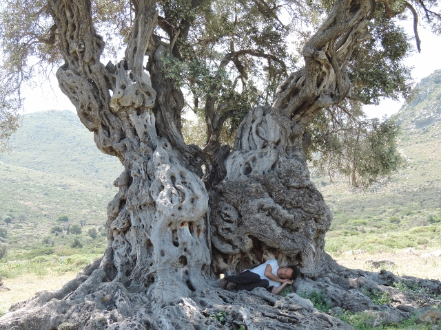 Athan in the belly of the olive tree