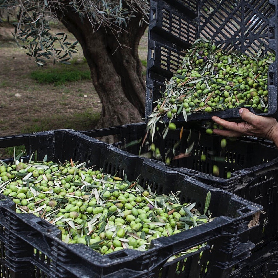 EFKRATO Organic Harvest