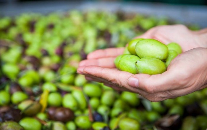 Handful of green olives. Eleni Zotou, Golden Tree