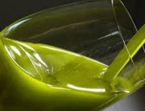 How to Store High Phenolic Olive Oil – Chill it Like Fine Wine